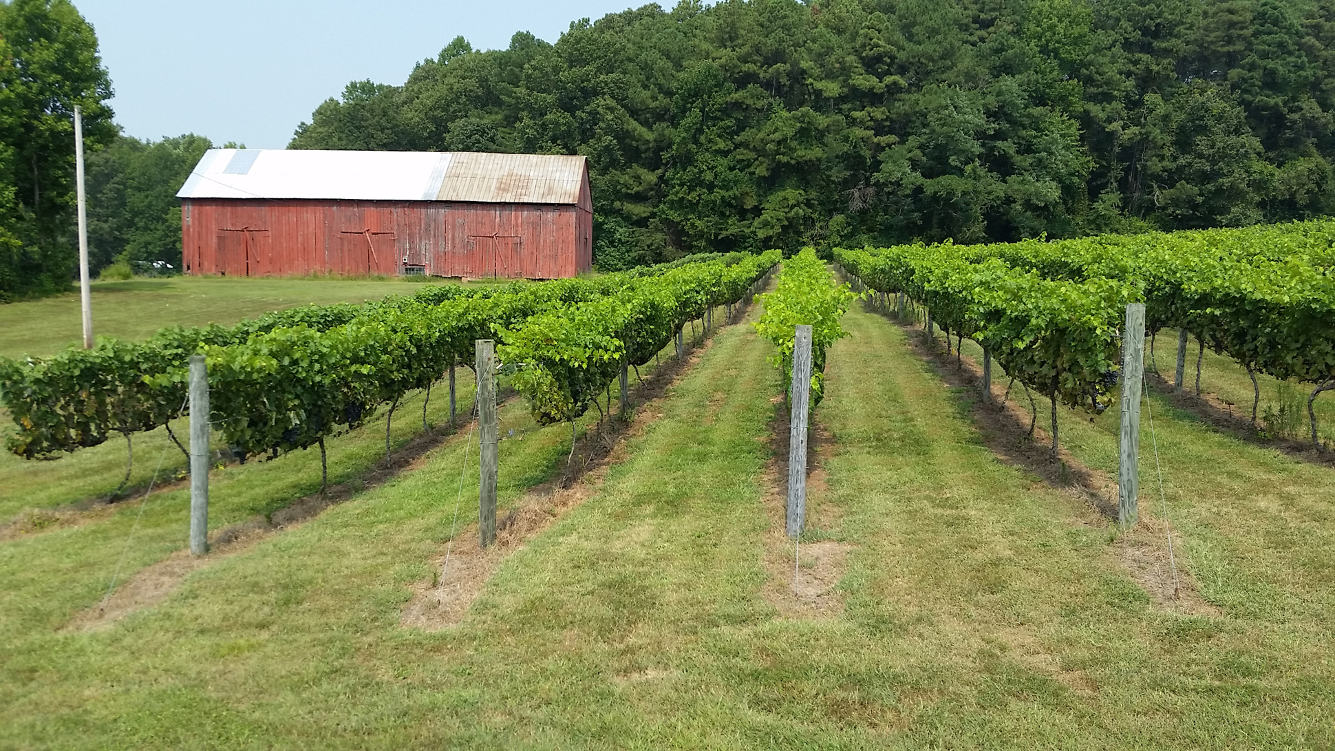 Maryland Grape Growers and University of Maryland Annual Summer Field Day is June 12, 2021 – EarlyBird pricing until Monday 10 AM.